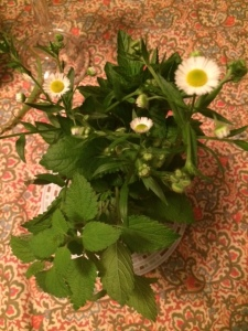 Herbs from my garden...cut and in water. smell amazing. IF they fade out...I go snip some more. Pretty all around the house. While your at it grow some mint and lemon balm...plant it anywhere outside. It spreads like crazy.